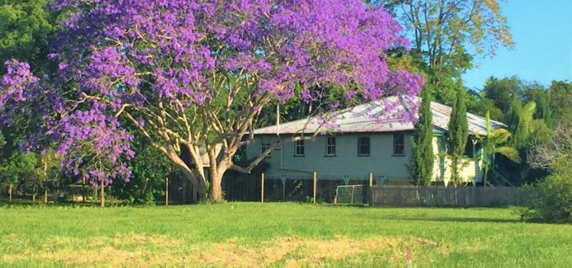 Picture Perfect Queenslander